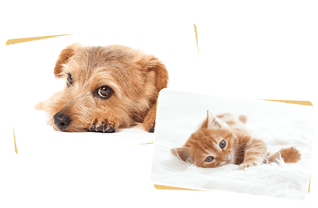 Dog&Cat Space Corone